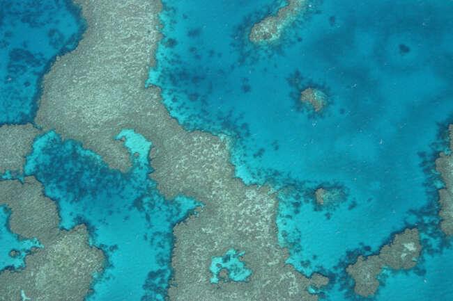 Cyan Reef