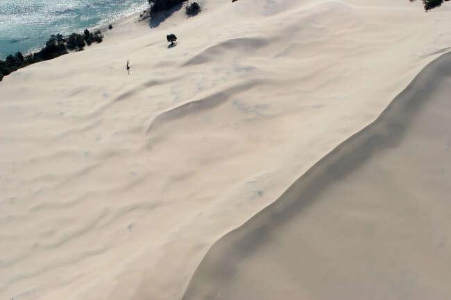 Sand's Tree Oblique