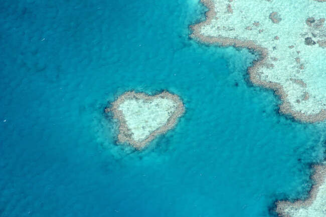 The Reef's Heart