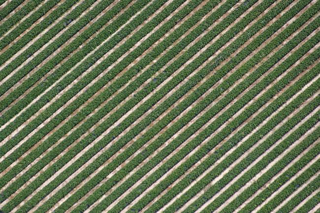 Diagonal Strawberries
