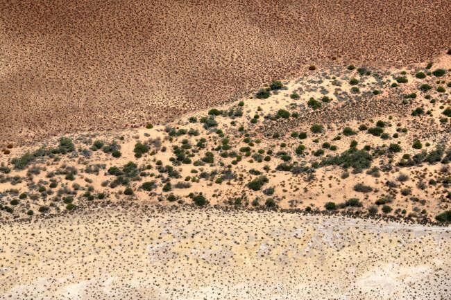 Desert Vain