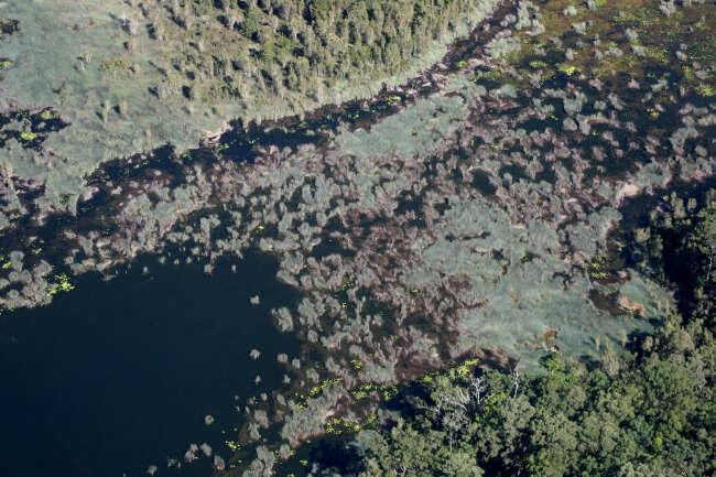 Reeds in Ewen Maddock Dam