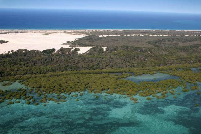 Mangrove Mirth
