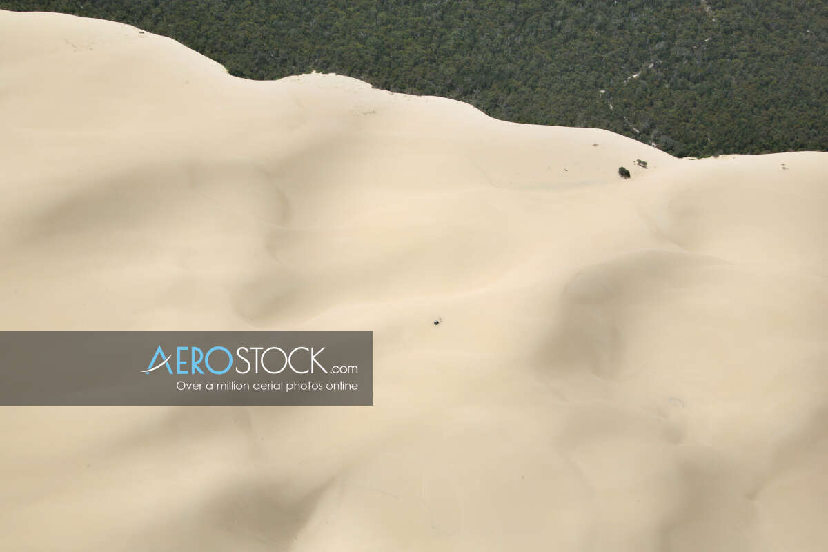 Sand Greets Forest