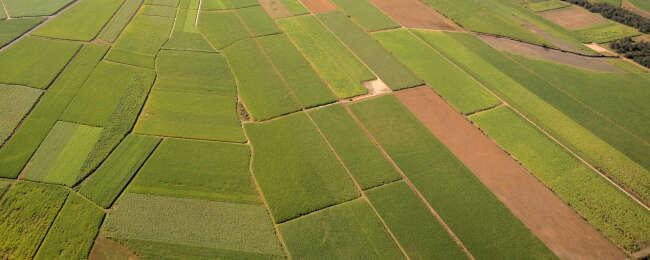 Sugarcane Quilt